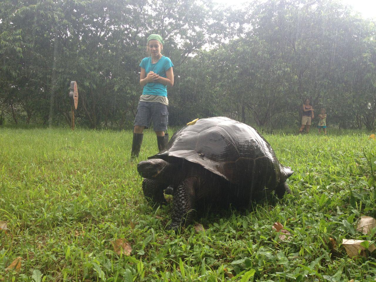 Diese über ein Meter grosse Riesenschildkröte kroch keine 2m entfernt an uns vorbei.