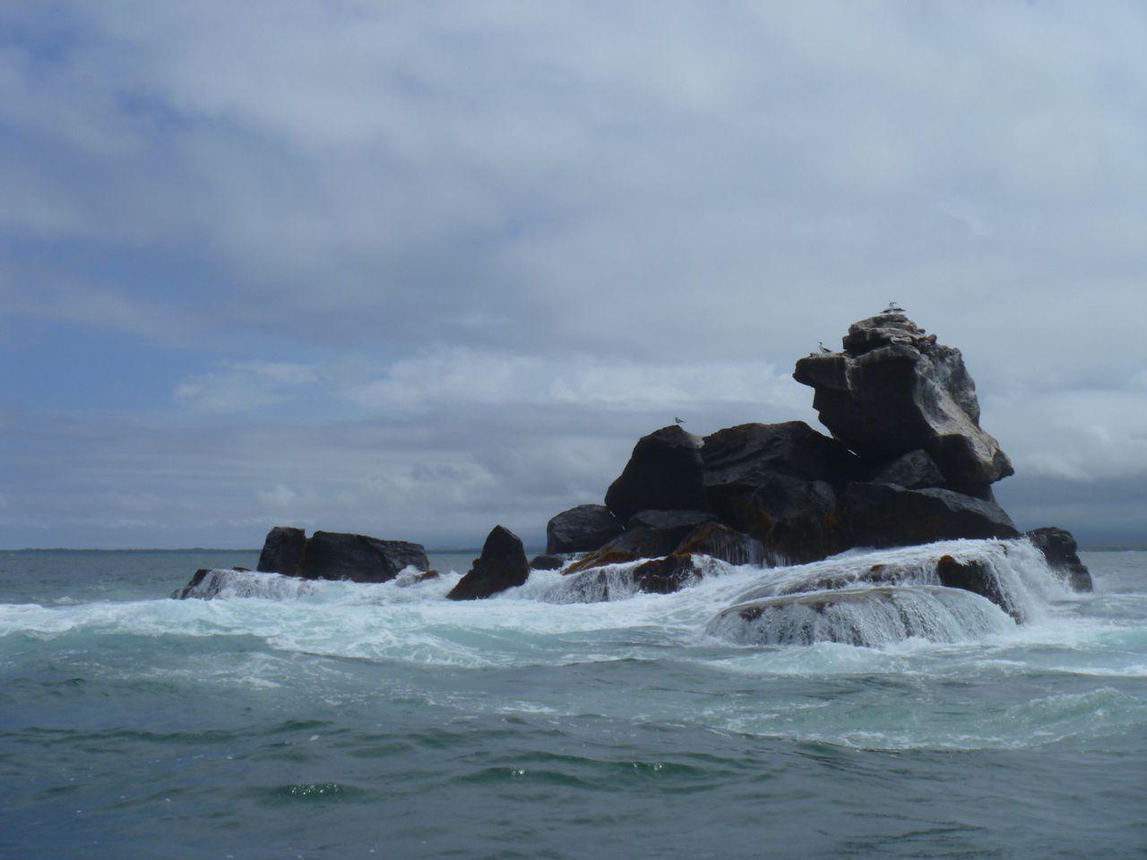 Blaufußtölpel auf dem Union Rock auf dem Weg nach Isabela