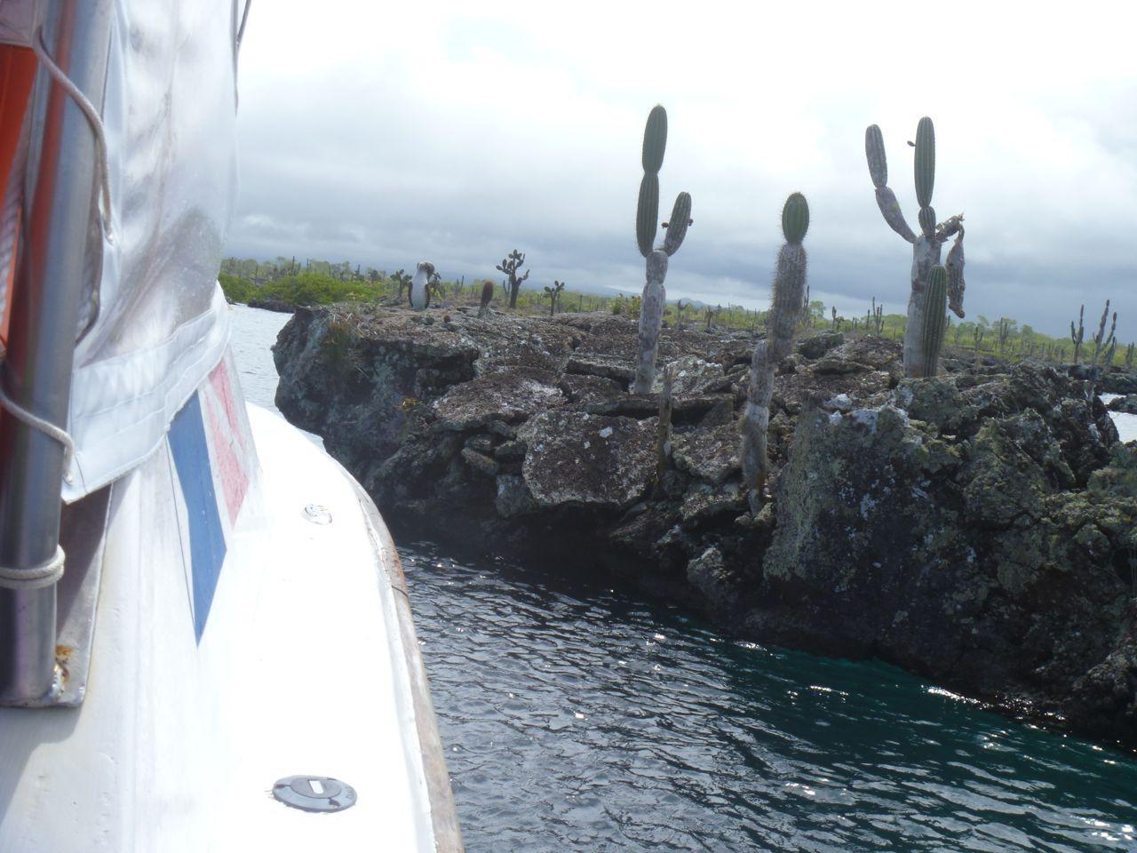 Mit dem Powerboat ganz knapp an den Lavainseln vorbei