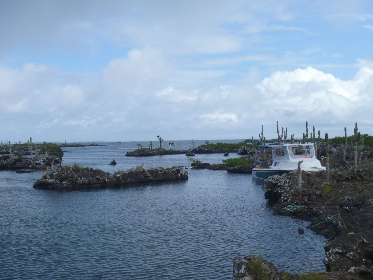Mit dem Boot an Lavainseln fest gemacht auf Isabela Galapagos
