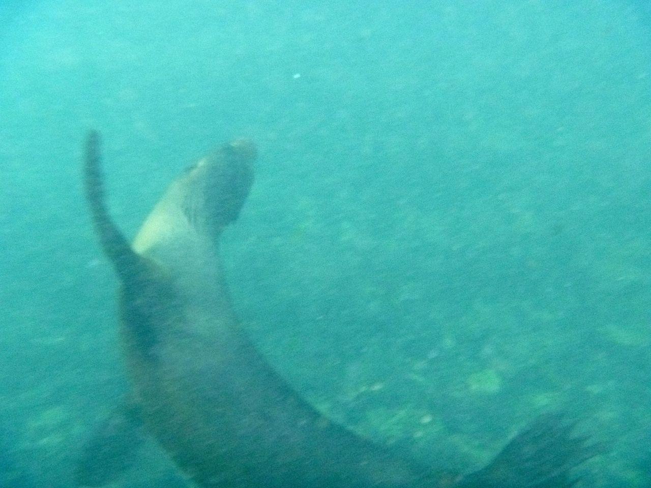 Diese Robbe hat regelrecht mit uns auf Galapagos im Wasser gespielt