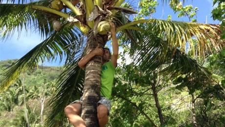 Constantin musste in ein Palme klettern, um grüne Kokosnüsse zu ernten