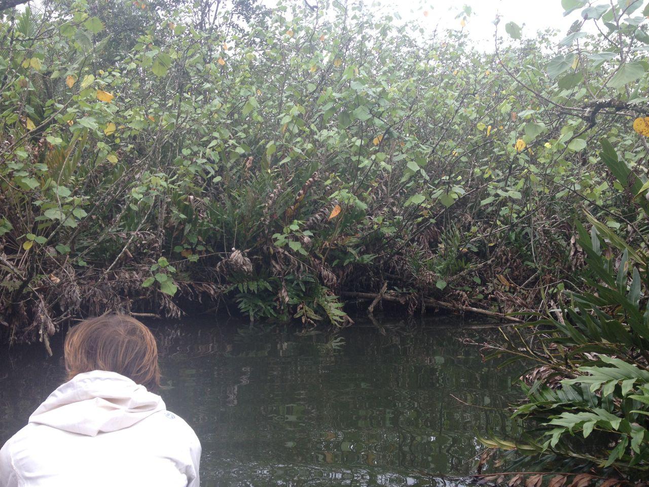 Hier geht es nicht weiter, ein Fluss auf Raiatea