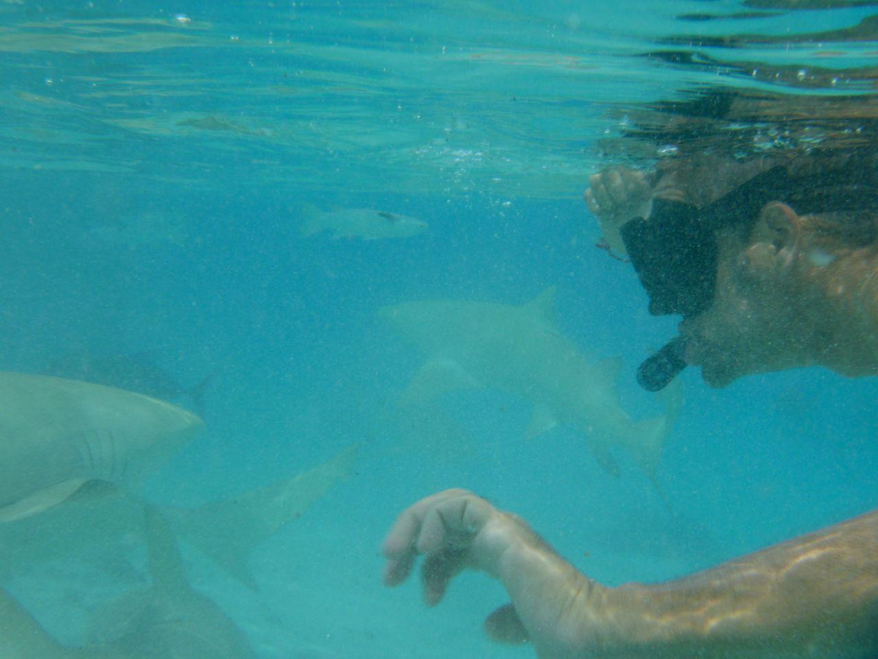 Constantin und Paula in Mitten von knapp 10 Zitronenhaien