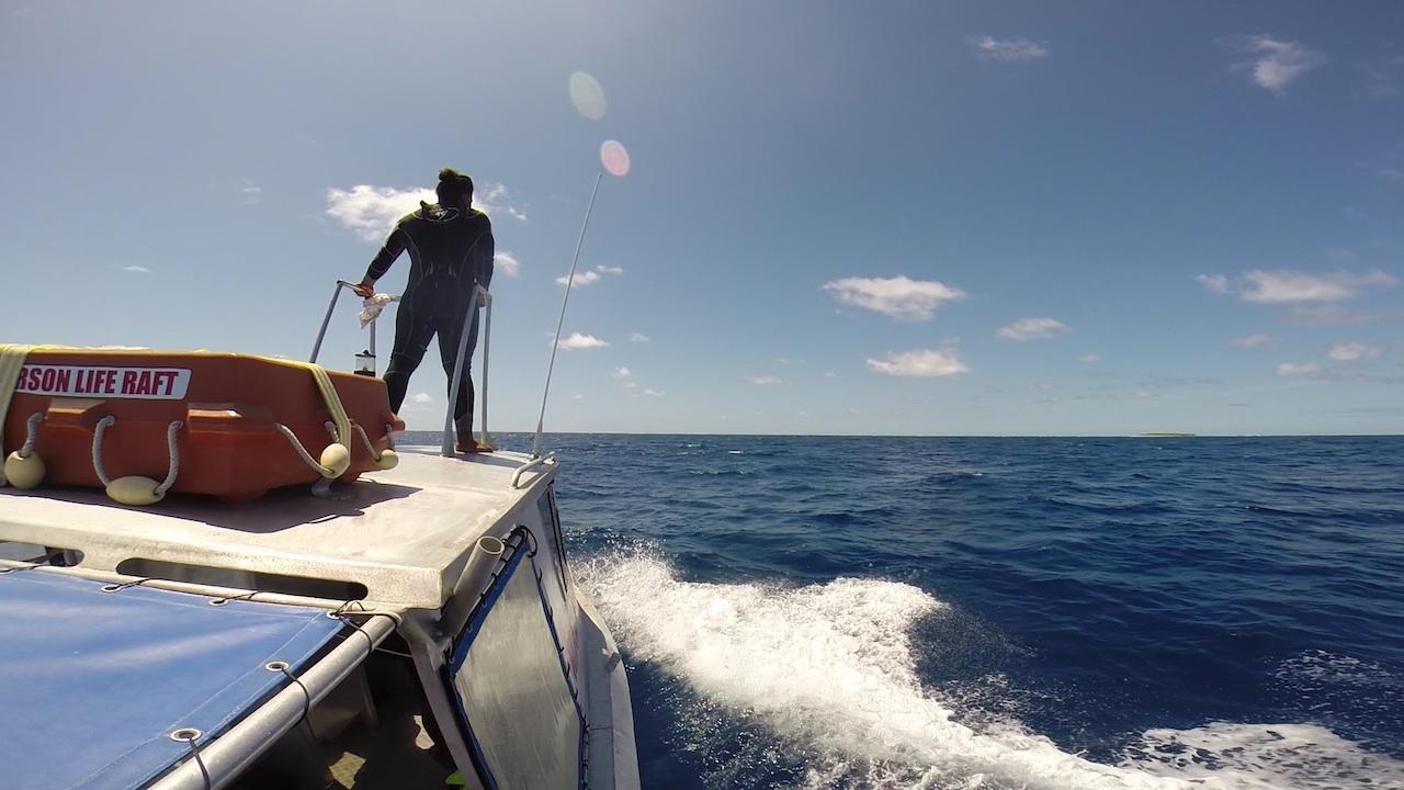 Unser Guide hält nach Buckelwalen Ausschau