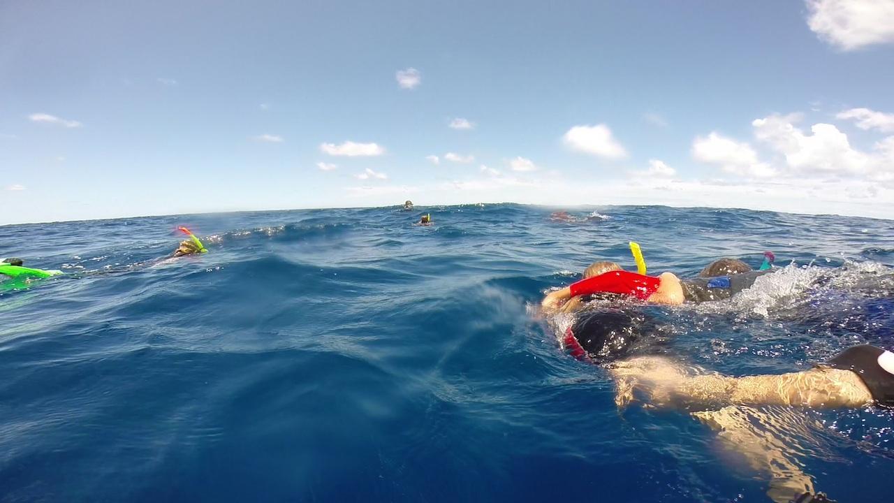 Paula im Arm, unterwegs in Richtung der Buckelwale