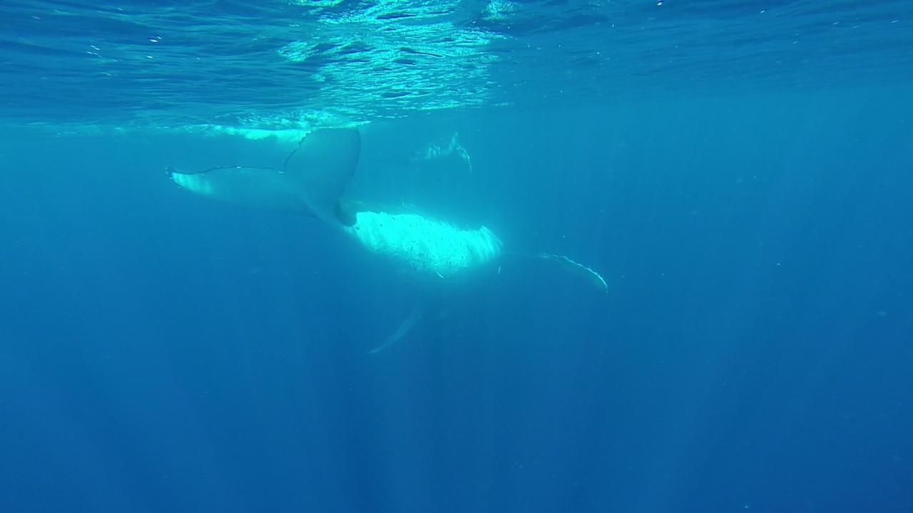 Die Crew der hapa na sasa beim Schwimmen mit Buckelwalen in Vava'u Tonga, ganz dicht dran.