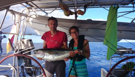 Ein 1 m Yellowfin Tuna kurz nach dem Fight