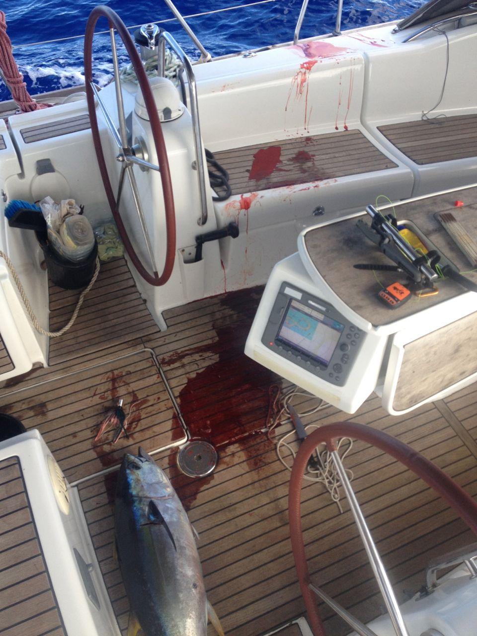 Ein schöner Yellowfin Tuna an Bord der hapa na sasa