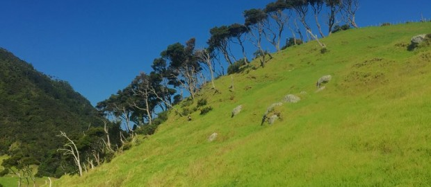 Auf dem Weg nach Oben in der Nähe von Whangarei