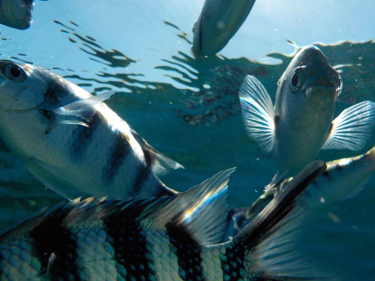 Fische am Split Rock in Savusavu Fiji wohin man blickt