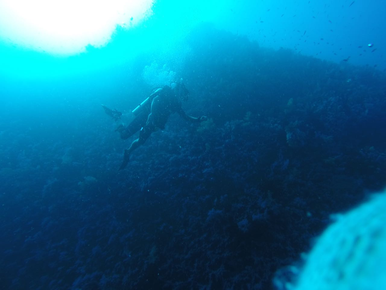 Die White Wall am Reinbow Reef in Fiji