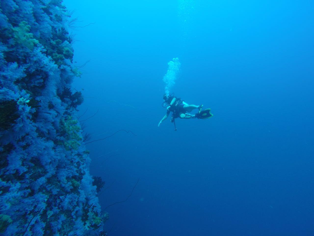 Die White Wall ein faszinierender Tauchgang am Rainbow Reef in Fiji
