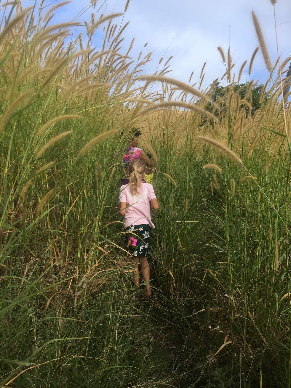 Das hohe Gras wird auf dem Weg in das Dorf Komo auf Fidschi immer dichter