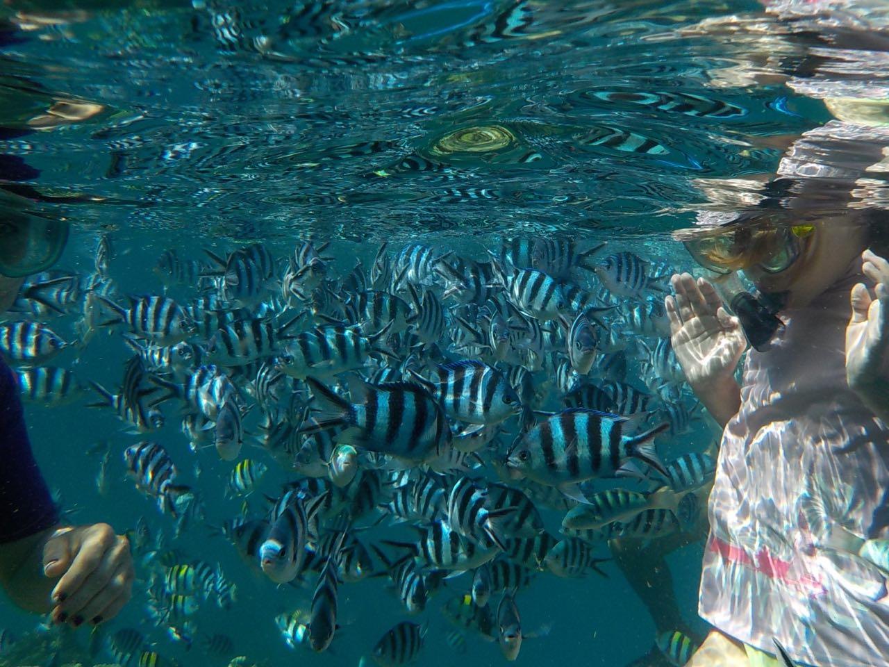Louisa in Mitten von Zebrafischen