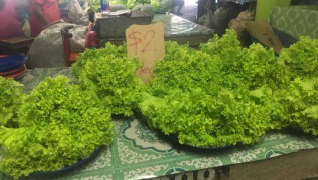 So unglaublich grüner Salat auf dem Obst- und Gemüsemarkt in Fidschi