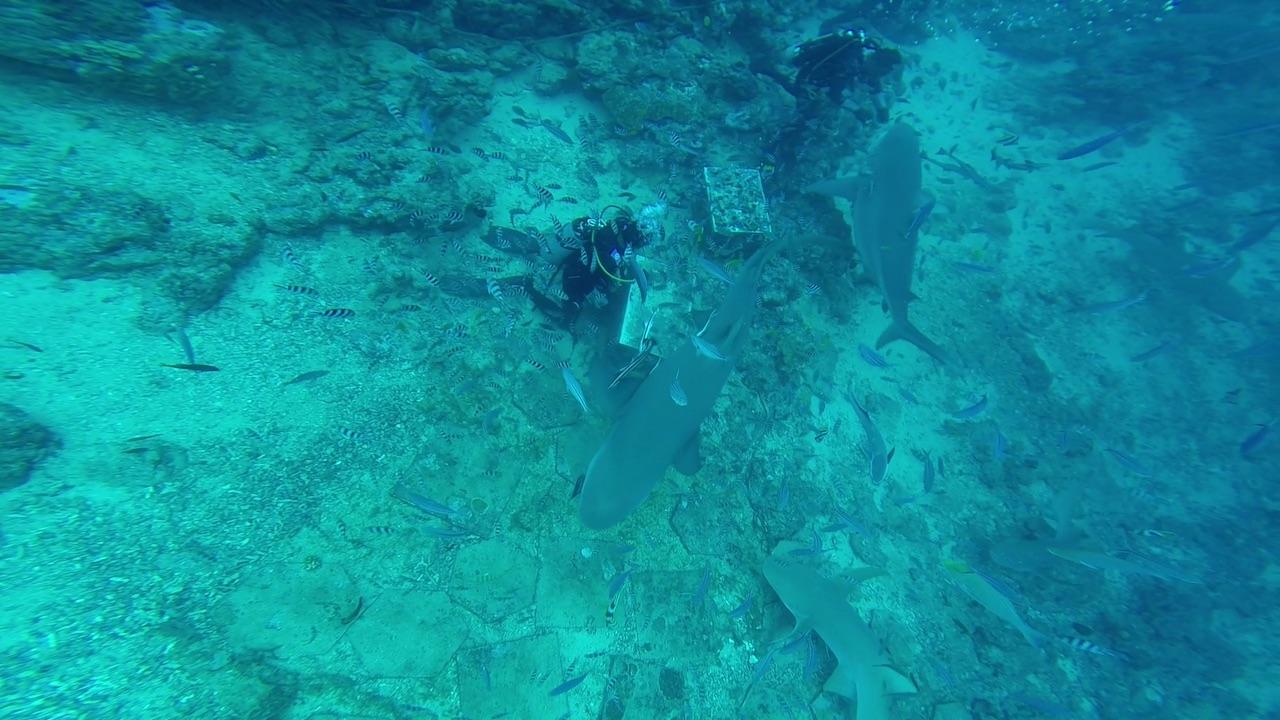 Essensausgabe für die Bull Sharks in Mbengga Fidschi