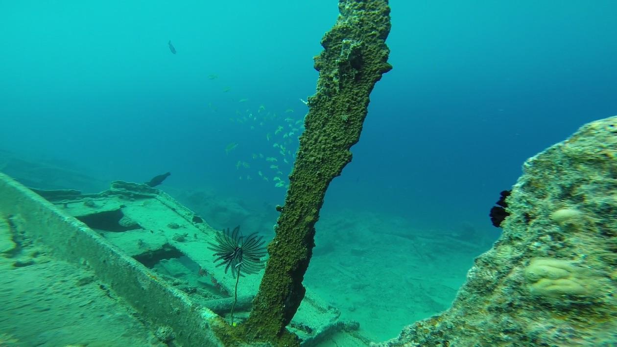 Am Million Dollar Point in Espiritu Santo Vanuatu finden wir mitunter finden wir sehr filigrane Strukturen