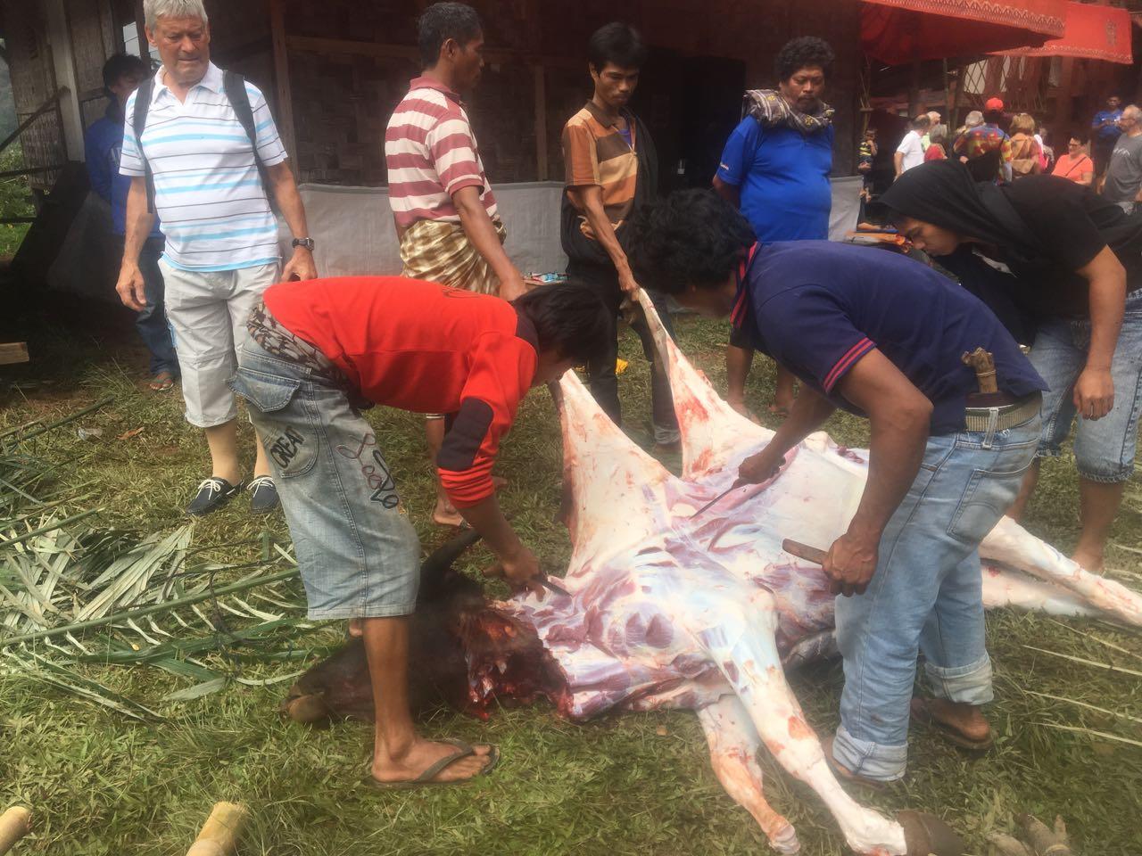 Nach dem Schnitt durch die Kehle werden den Büffeln hier in Tana Toraja in Indonesien die Felle abgezogen
