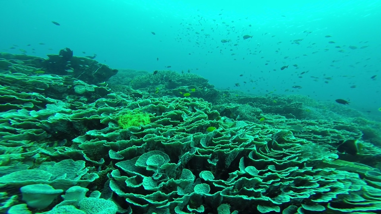 Beeindruckende unterwasserwelt beim Tauchen in Komodo Indonesien