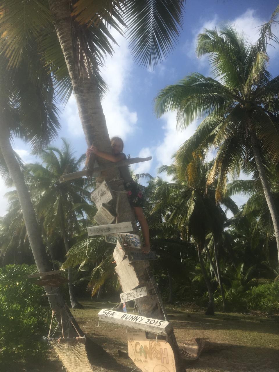 Paula erkletter diese Palme, um unser Bootsschild aufzuhängen