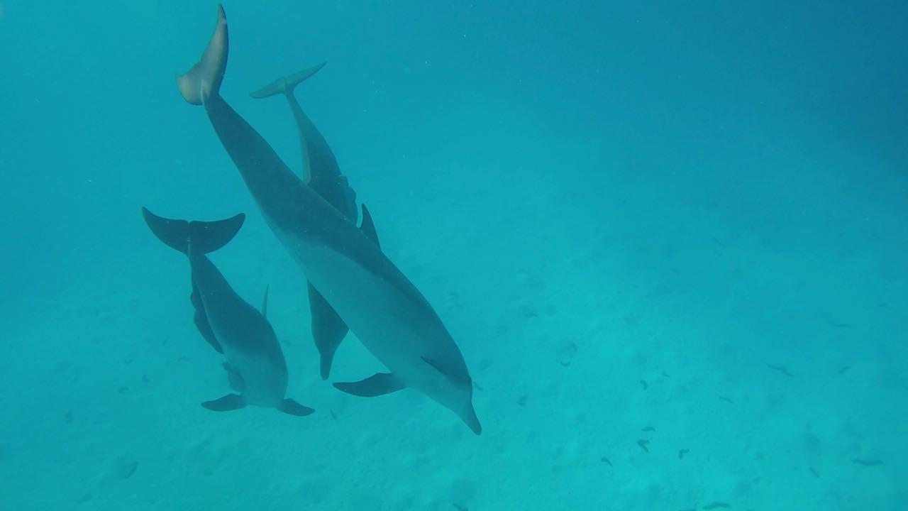 Delfine sind einfach die schönsten Tiere im Wasser