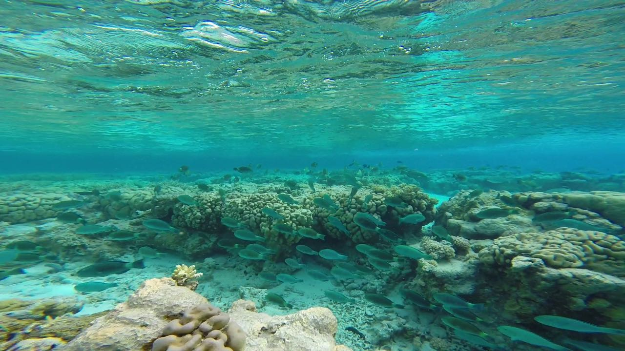Traumhaftes Schnorcheln auf Cocos Keeling