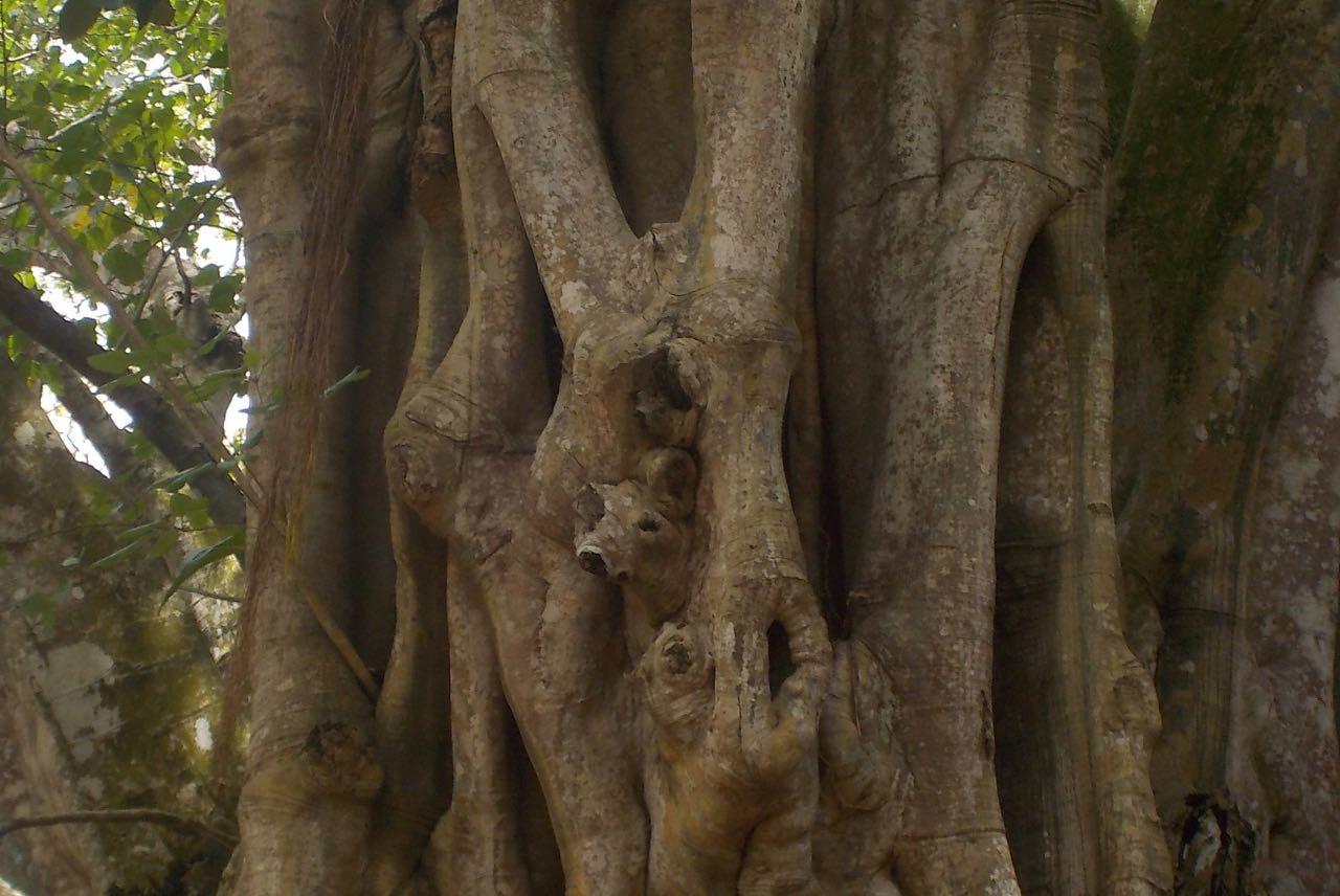In diesem Baumstamm im botanischen Garten auf Mauritius versteckt sich ein kleines Rehkitz